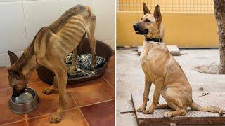 Bir köpeğin inanılmaz değişimi!