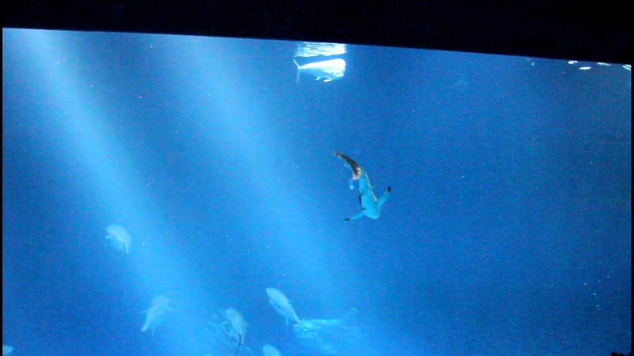 Great White Shark Baby at Monterey Bay Aquarium! - YouTube