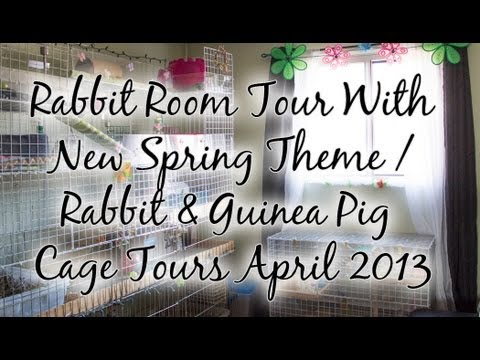 BudgetBunny: Rabbit Room Tour With New Spring Theme / Rabbit & Guinea Pig Cage Tours April 2013!