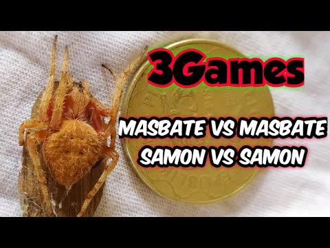 SAMON VS SAMON