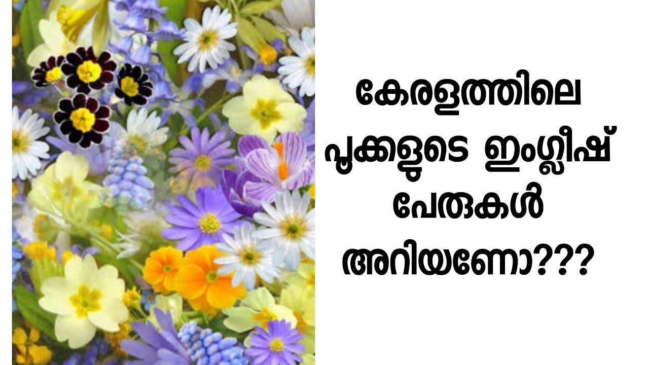 Kerala Flowers English Names Various Flowers In Kerala English Names Youtube