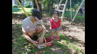 DI AN CHERRY BAO BUNG va Xem NONG TRAI SO THU. Pick Your Own Cherry