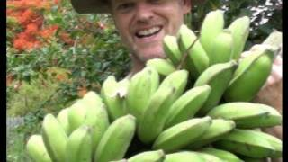 How to GROW & HARVEST BANANAS
