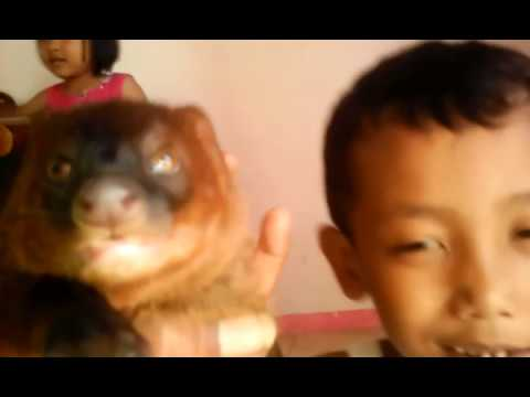 Garangan vs kucing