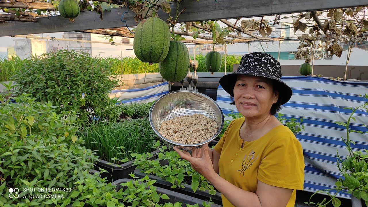 Kênh Khoa Hiền thông báo tặng hạt MƯỚP TÁO ĐÀI LOAN mời các Cô Chú , Anh Chị đăng ký nhận hạt giống