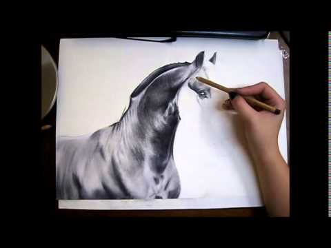 friesian horse drawing time lapse youtube