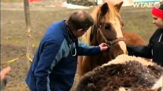 Woman's life-saving mission saves neglected horses from harm