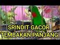Serindit Gacor Tajam Pancingan Ampuh  Mp3 - Mp4 Download