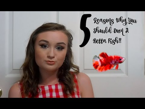 5 REASONS WHY YOU SHOULD OWN A BETTA FISH!! | ItsAnnaLouise