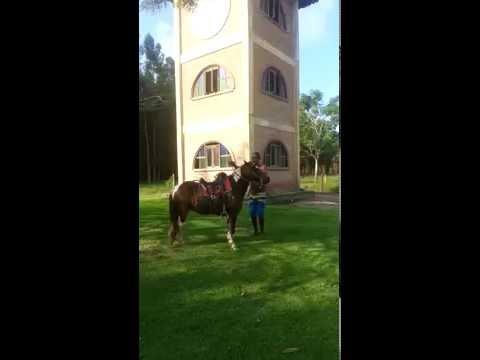 O Tombo De Um Cavalo