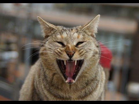 【閲覧注意】Cat eating rat!ネズミを食べる猫1