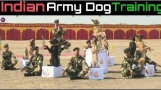 BSF Dog Training Video