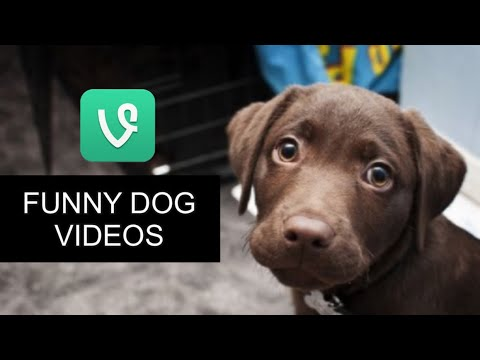 Baby Dogs 🔴 Cute and Funny Dog Videos Compilation ( 2019 ) cutest animals moments [MUST SEE]