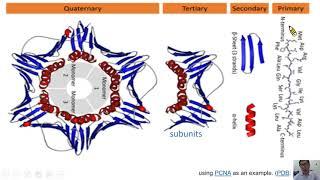 胺基酸是什麼1-生命科學暨生物科技學系唐世杰