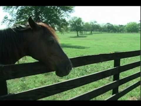 The Brazos Valley Bucket List - The Inn at Dos Brisas - Shane McAuliffe - KBTX News 3