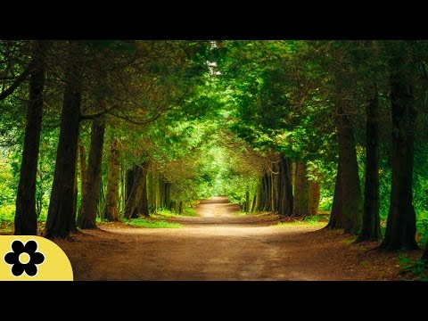 Healing Music, Meditation Music Relax Mind Body, Relaxing Music, Slow Music, ✿2593C