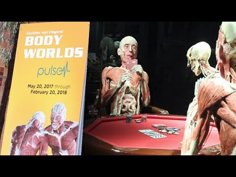Gunther von Hagens Plastination | BODY WORLDS Pulse 2017 | Selena Thinking Out Loud Vlog