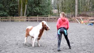 How to Teach Your Horse to do LIBERTY - The first Steps of Liberty training