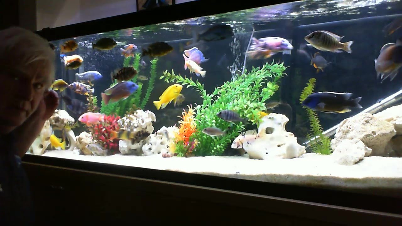My New 72 Led And A Look Into The 125 Gallon African Cichlid Tank