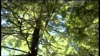 James Cook documentary