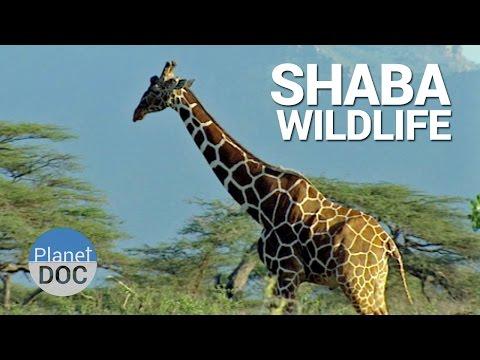 Shaba. Wildlife | Nature - Planet Doc Full Documentaries