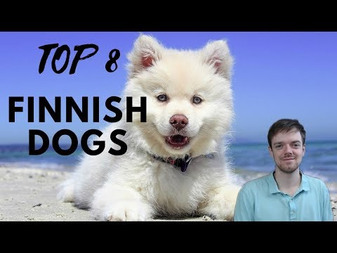 TOP 8 Finnish Dog Breeds