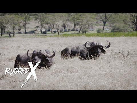Cape Buffalo – Deadly Duo with J Alain Smith