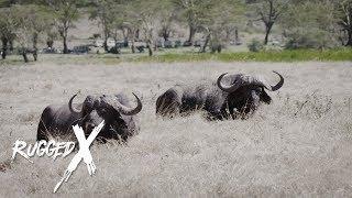Cape Buffalo - Deadly Duo with J Alain Smith