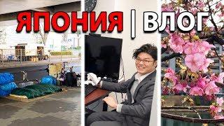 Как начинается мой рабочий день в Японии: коты, сакура, бездомные и офис  [ЯПОНИЯ | ВЛОГ]