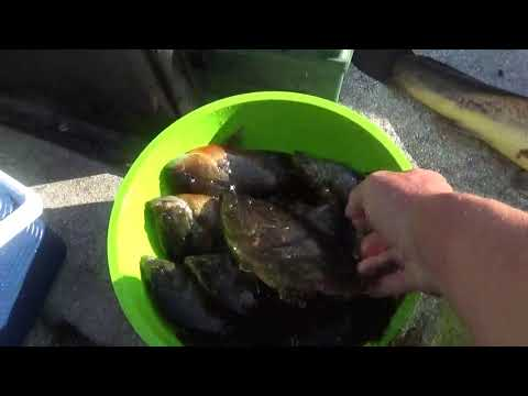 Bottom Bream Fishing Black River South Carolina