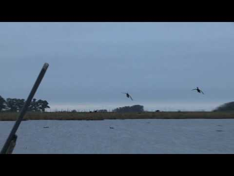 Duck Hunting Paradise: Part 1 - MOJO Migration