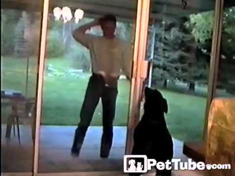 The Biggest Dog Door- PetTube