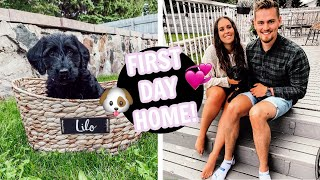 BRINGING HOME OUR 8 WEEK OLD LABRADOODLE PUPPY! First Day as New Dog Parents Vlog