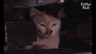 Cat Supermom Refuses To Leave The Car Because...   Kritter Klub