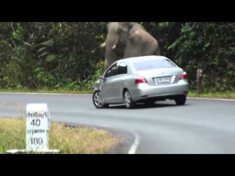Слон против авто. Смешное видео. Приколы..mp4