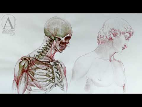 Human Anatomy Anatomy Lessons For Artists