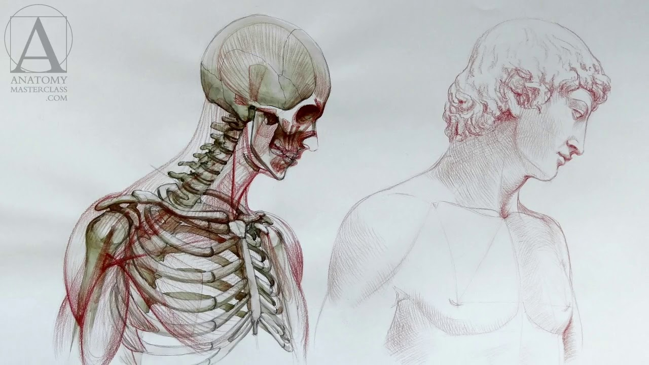 Human Anatomy - Anatomy Lessons for Artists - YouTube