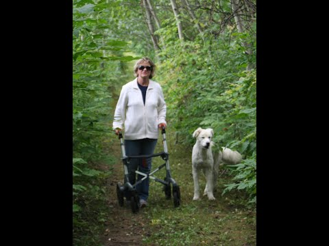 All Terrain Tires >> Rolling Walker/ Rollator with seat and brakes for Seniors - YouTube