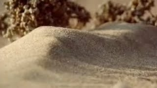 How to make a sand dune - Dune - BBC wildlife