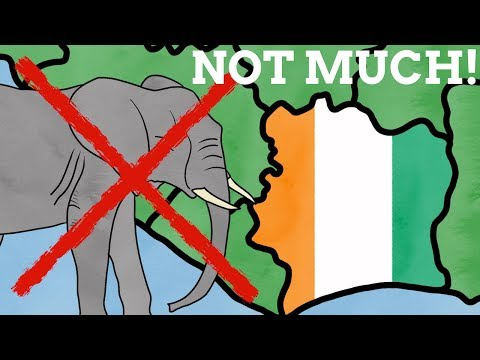 How Much Ivory Is In The Ivory Coast?