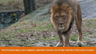 How to Photograph Zoo Animals