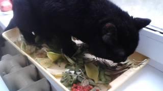 Кот жрёт осенние листья