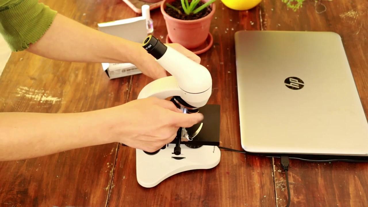Cum respira plantele? Experiment. Stomate la microscop | Seminte de Stiinte - Centrul Schubz Rasnov