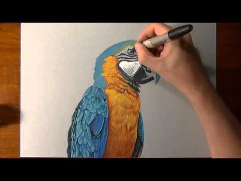 how to draw a parrot realistic
