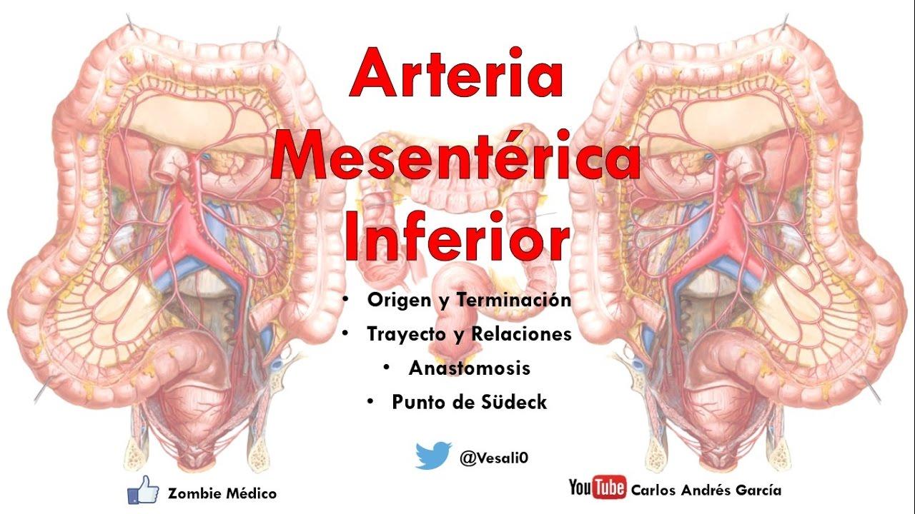 Anatomía - Arteria Mesentérica Inferior (Origen, Trayecto ...