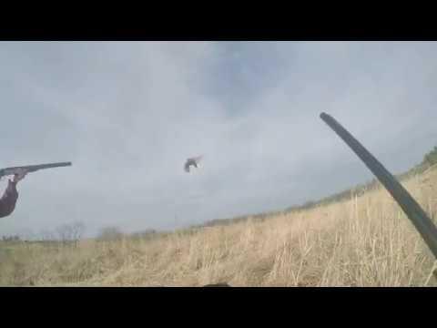 Upland Bird Hunt - Stocked Pheasant, Chuckar And Quail