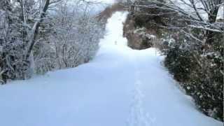 シベリアンハスキー 北斗9歳 健太14歳 ジョン10歳 雪山を走る.