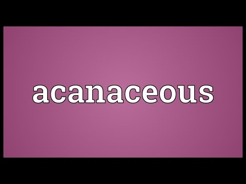 Header of Acanaceous