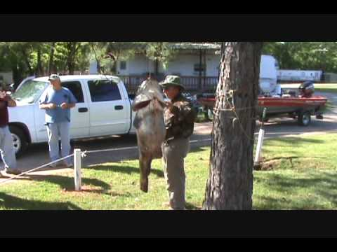Team Stone-Lake Fork Fishing w/ Shannon Wheeler 02.20.16 from YouTube · High Definition · Duration:  11 minutes 10 seconds  · 430 views · uploaded on 2/20/2016 · uploaded by Tony Stone