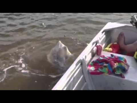 Tin Can Bay Fishing